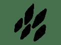 scribbles-scribbles-35